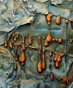 Rinde des Weihrauchbaumes Boswellia elongata (Detail)
