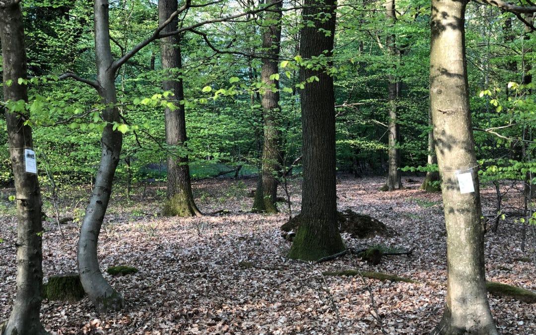 Lyrischer Waldspaziergang …