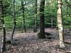 Lyrischer Waldspaziergang ... Lesung von Gedichten im Wald